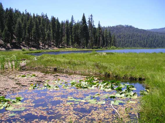 Odes At Willow Lake Plumas Co