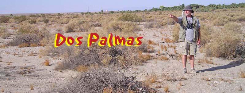 Dos Palmas Spring - Wikipedia